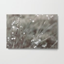 Cold Morning Dew Metal Print