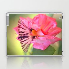 Old Scarce Swallowtail butterfly 2795 Laptop & iPad Skin