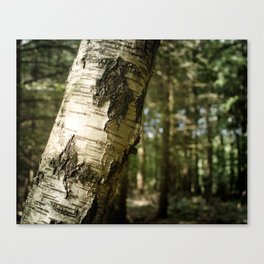 Falling Forest Canvas Print