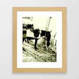 Donkey and Dog 1 Framed Art Print