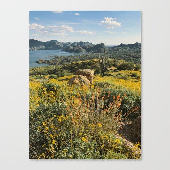 Arizona Spring Mountain Bloom Canvas Print