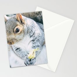 Squirrely Snacks Stationery Cards