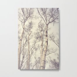 Winter Birch Trees Metal Print