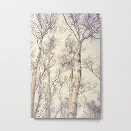 Winter Birch Trees Metal Print