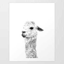 Black and white alpaca animal portrait Art Print