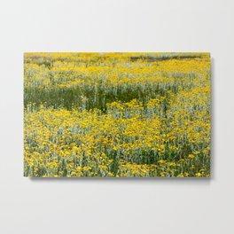Flowers of Yellow (Mono Lake, California) Metal Print