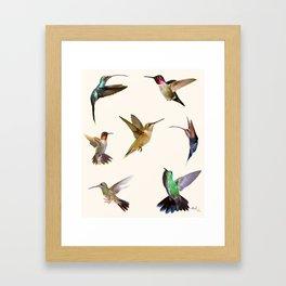 Kolibri Framed Art Print