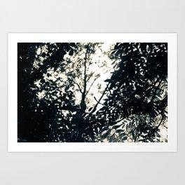 Sun Drops Art Print