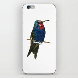Blue-tufted Starthroat iPhone Skin