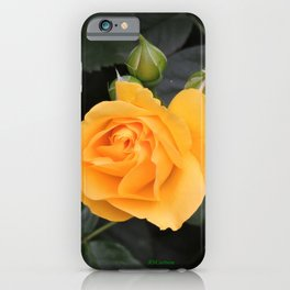 "A Rose Named ""Julia Child"" iPhone Case"