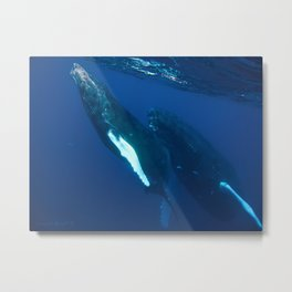 Humpback Whale and her Calf coming up for air Metal Print