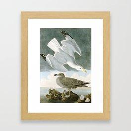 Seagulls Illustration - Birds in America Framed Art Print