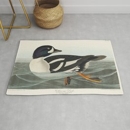 Golden-eye Duck from Birds of America (1827) by John James Audubon (1785 - 1851) etched by Robert Ha Rug