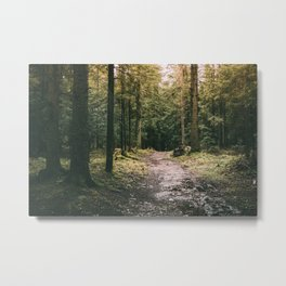 Mysterious Forest Path Metal Print