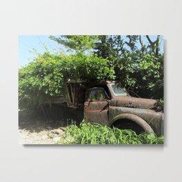 Overgrown garden Metal Print