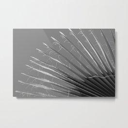 Old Palm Metal Print