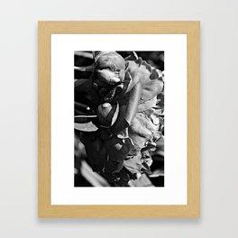 B&W Rain Drops Framed Art Print