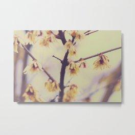 Spring Surprise Metal Print