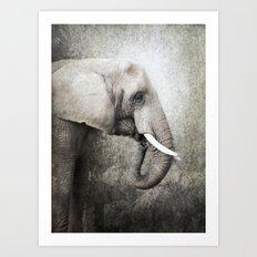 The old elephant Art Print