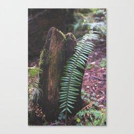 Plant and Bark Canvas Print