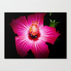 Bursting With Life Canvas Print
