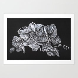 Silver Orchid Art Print