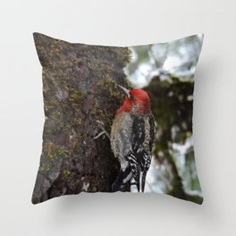 Red-Breasted Sapsucker in Christmas Snow Throw Pillow