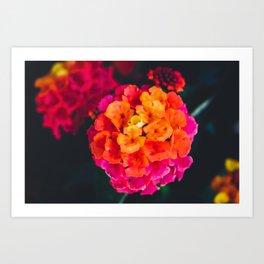 Color Pop Flower Art Print