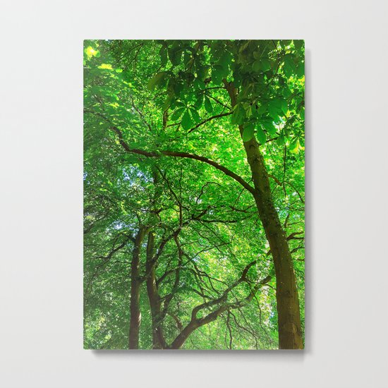 Maple Canopy, Dreamy and Magical Light Metal Print