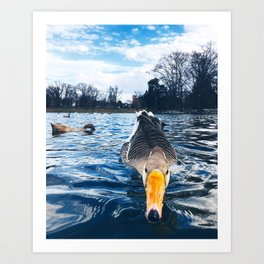 duck at byrd park Art Print