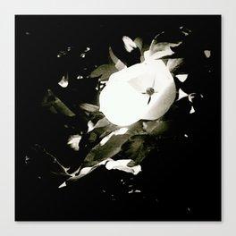 the strange flower Canvas Print