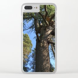 Tree at Kubota Garden in Seattle Clear iPhone Case