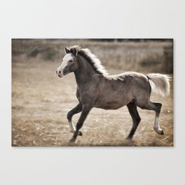 Young One Canvas Print