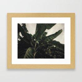 Vintage Tropical Banana Trees Framed Art Print
