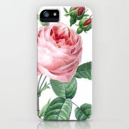 Nature, botanical print, flower poster art of Provence rose iPhone Case