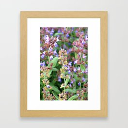 A riot of blooms Framed Art Print