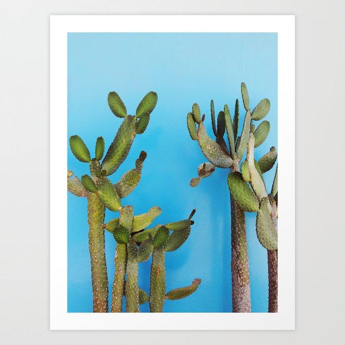 Cactus in Chicama, Peru Art Print