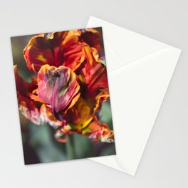 Frilly Stationery Cards