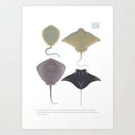 Western Australian Rays Art Print