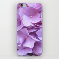 hydrangea iPhone & iPod Skins featuring Hydrangea by lillianhibiscus