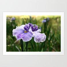 Iris in the park Art Print