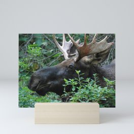 Moose Portrait Mini Art Print