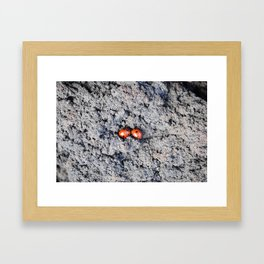 Lady and Gentleman Bug Framed Art Print