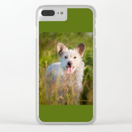 Single white stray tyke dog at the meadow Clear iPhone Case