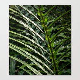 Forest Floor Frond Canvas Print