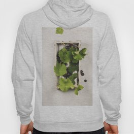 Fresh grape in wooden box. Top view, beton background Hoody