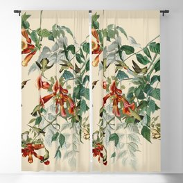 Vintage Hummingbird Illustration - Birds of America Blackout Curtain
