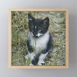 Feral Kitten With Blue-Seafoam Eyes Playing With Grass Framed Mini Art Print