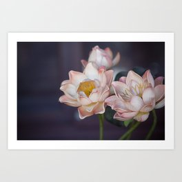 Lovely Water Lily II Art Print