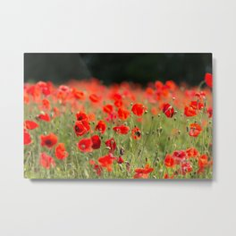 Poppy Meadow Metal Print